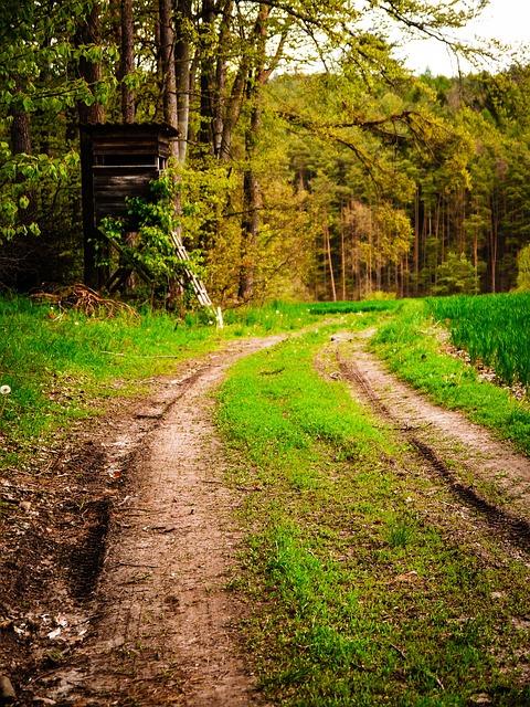 im Wald spazieren